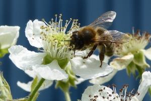 Une nouvelle ruche au sein de la Fondation Cognacq-Jay